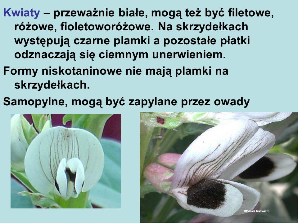 Kwiaty – przeważnie białe, mogą też być filetowe, różowe, fioletoworóżowe. Na skrzydełkach występują czarne plamki a pozostałe płatki odznaczają się ciemnym unerwieniem.