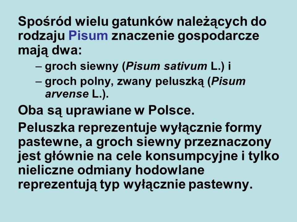 Oba są uprawiane w Polsce.