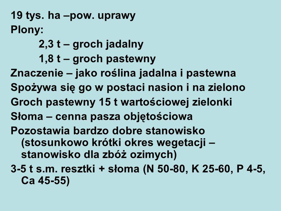 19 tys. ha –pow. uprawy Plony: 2,3 t – groch jadalny. 1,8 t – groch pastewny. Znaczenie – jako roślina jadalna i pastewna.