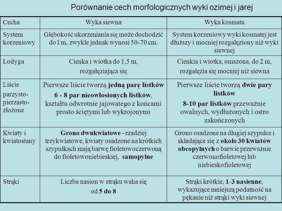 Porównanie cech morfologicznych wyki ozimej i jarej