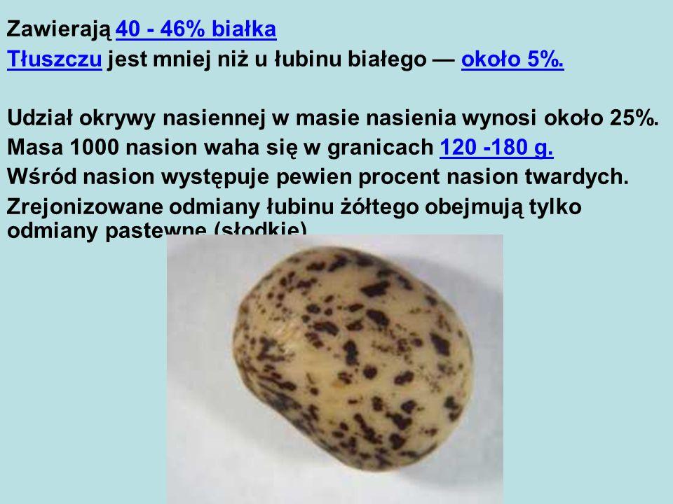 Zawierają 40 - 46% białka Tłuszczu jest mniej niż u łubinu białego — około 5%. Udział okrywy nasiennej w masie nasienia wynosi około 25%.