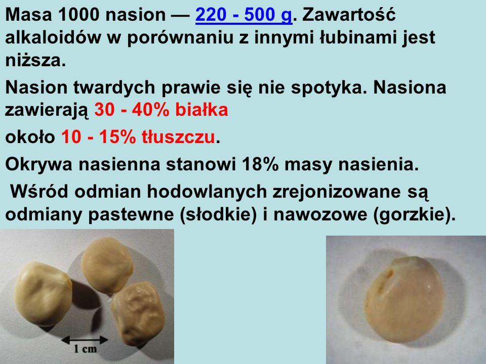 Masa 1000 nasion — 220 - 500 g. Zawartość alkaloidów w porównaniu z innymi łubinami jest niższa.