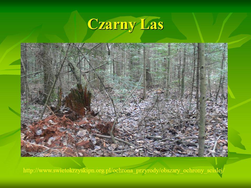 Czarny Las http://www.swietokrzyskipn.org.pl/ochrona_przyrody/obszary_ochrony_scislej/