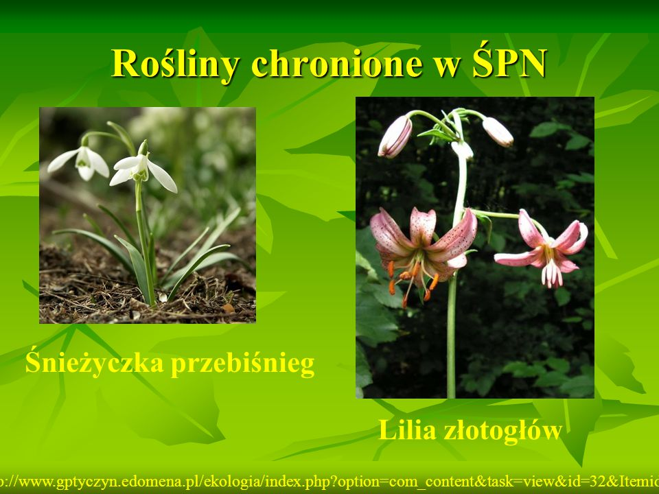 Rośliny chronione w ŚPN