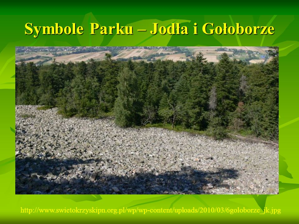 Symbole Parku – Jodła i Gołoborze