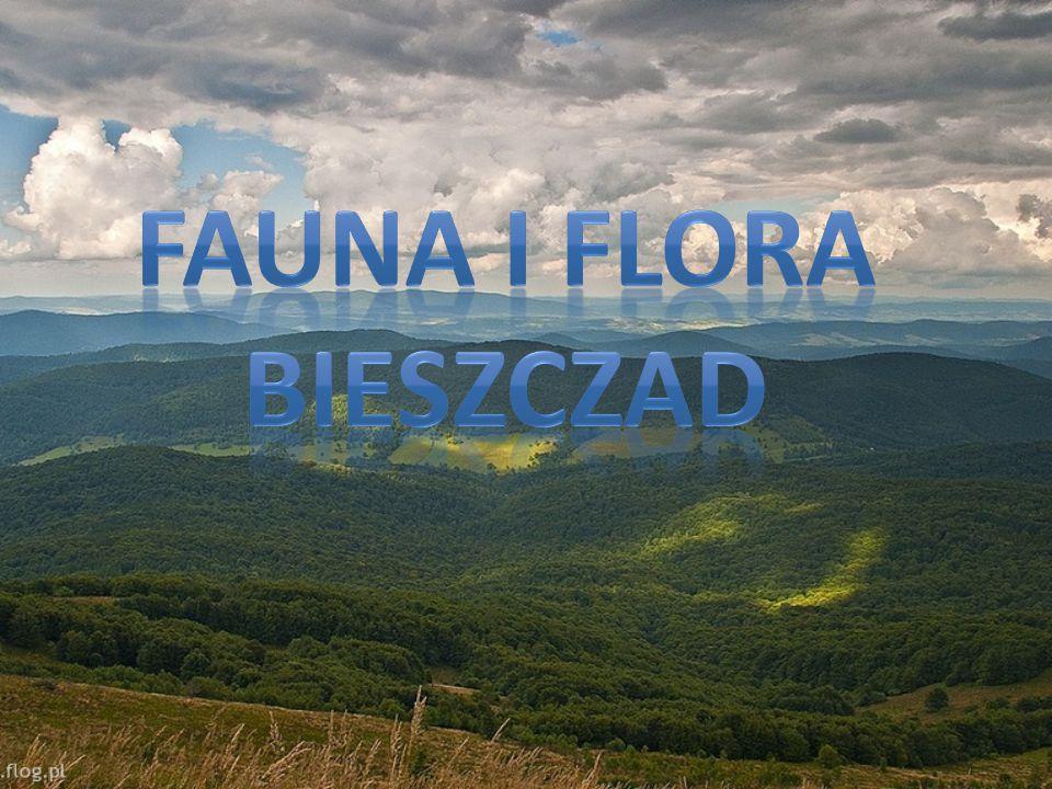 Fauna I Flora Bieszczad