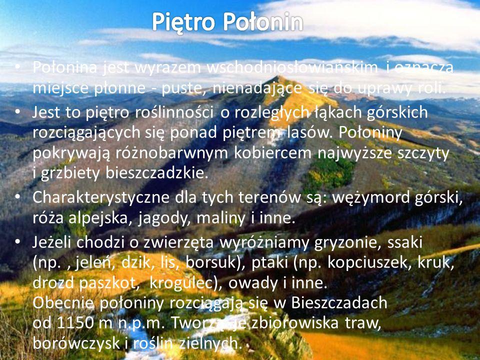 Piętro Połonin Połonina jest wyrazem wschodniosłowiańskim i oznacza miejsce płonne - puste, nienadające się do uprawy roli.