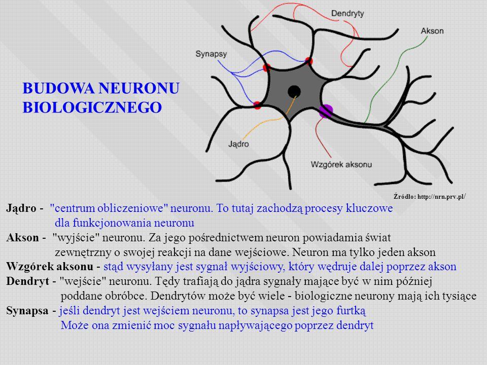 BUDOWA NEURONU BIOLOGICZNEGO