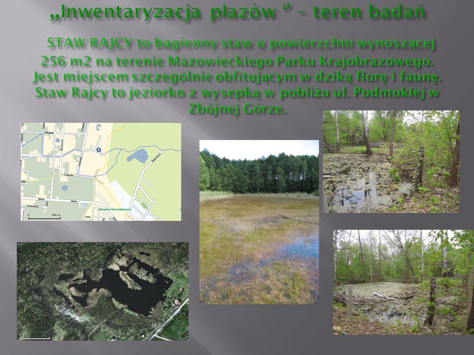 """""""Inwentaryzacja płazów '' – teren badań STAW RAJCY to bagienny staw o powierzchni wynoszącej 256 m2 na terenie Mazowieckiego Parku Krajobrazowego."""
