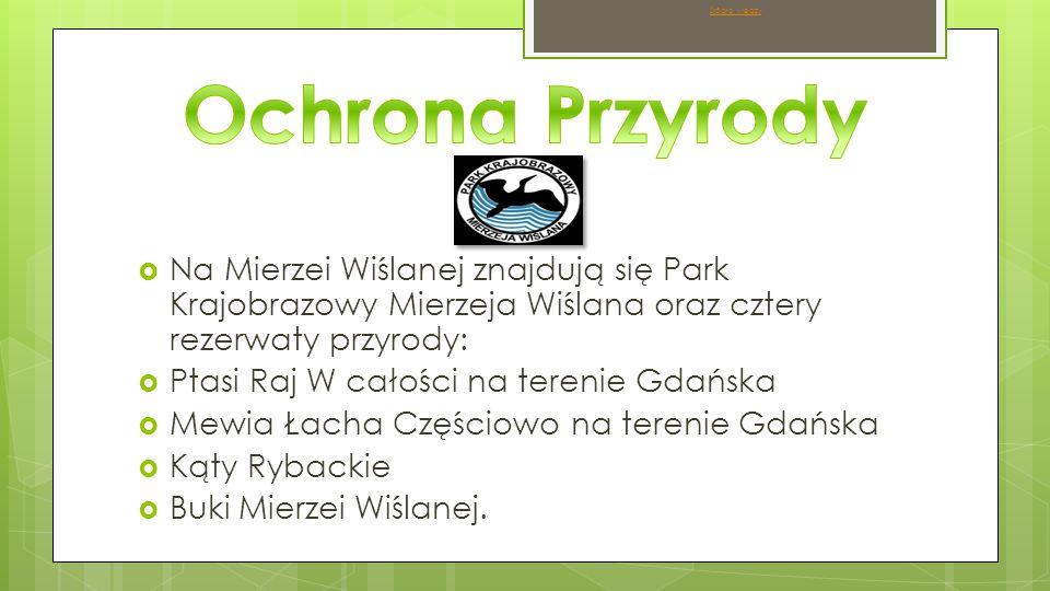 Źródło wiedzy Ochrona Przyrody. Na Mierzei Wiślanej znajdują się Park Krajobrazowy Mierzeja Wiślana oraz cztery rezerwaty przyrody: