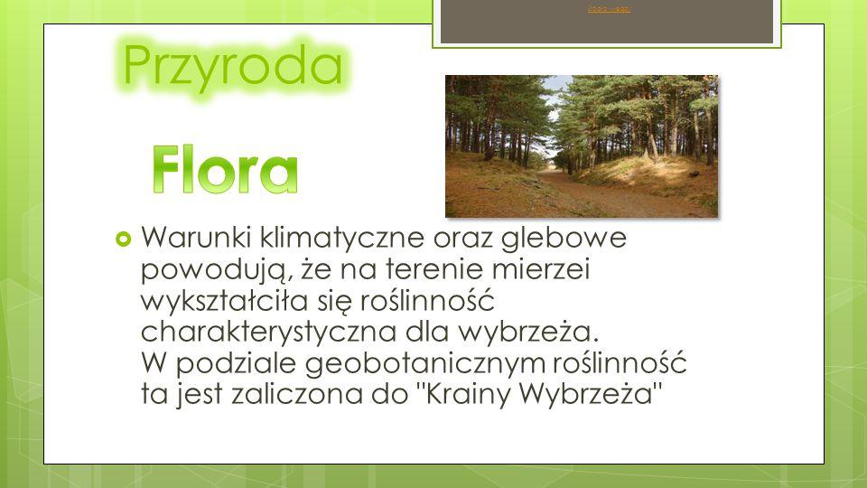 Źródło wiedzy Przyroda. Flora.