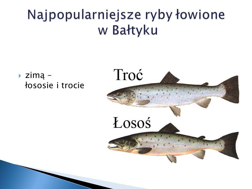 Najpopularniejsze ryby łowione w Bałtyku