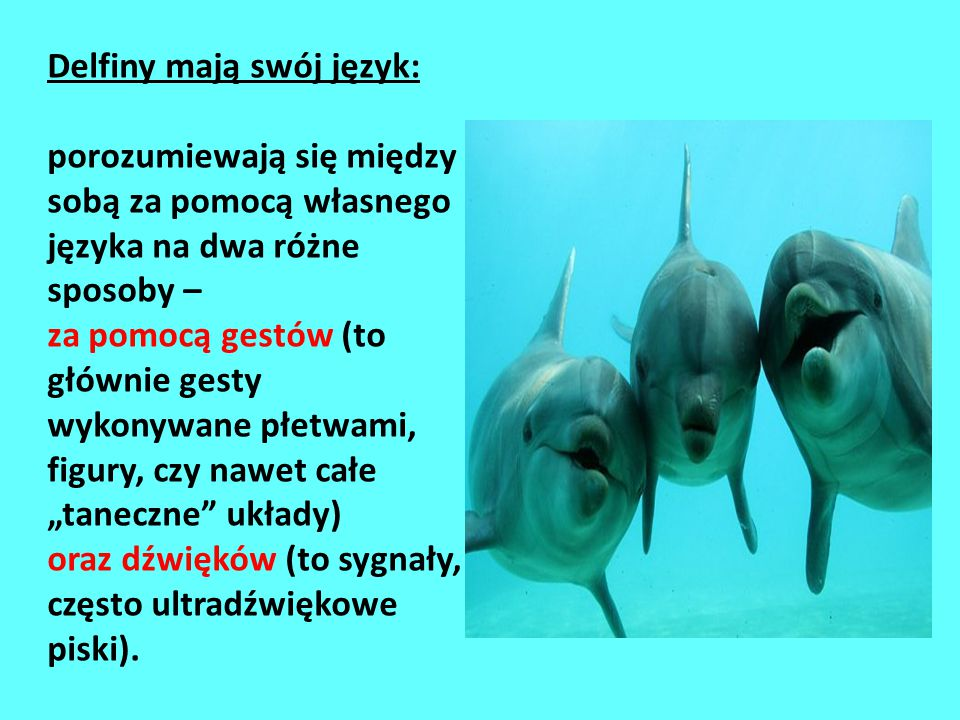 Delfiny mają swój język: