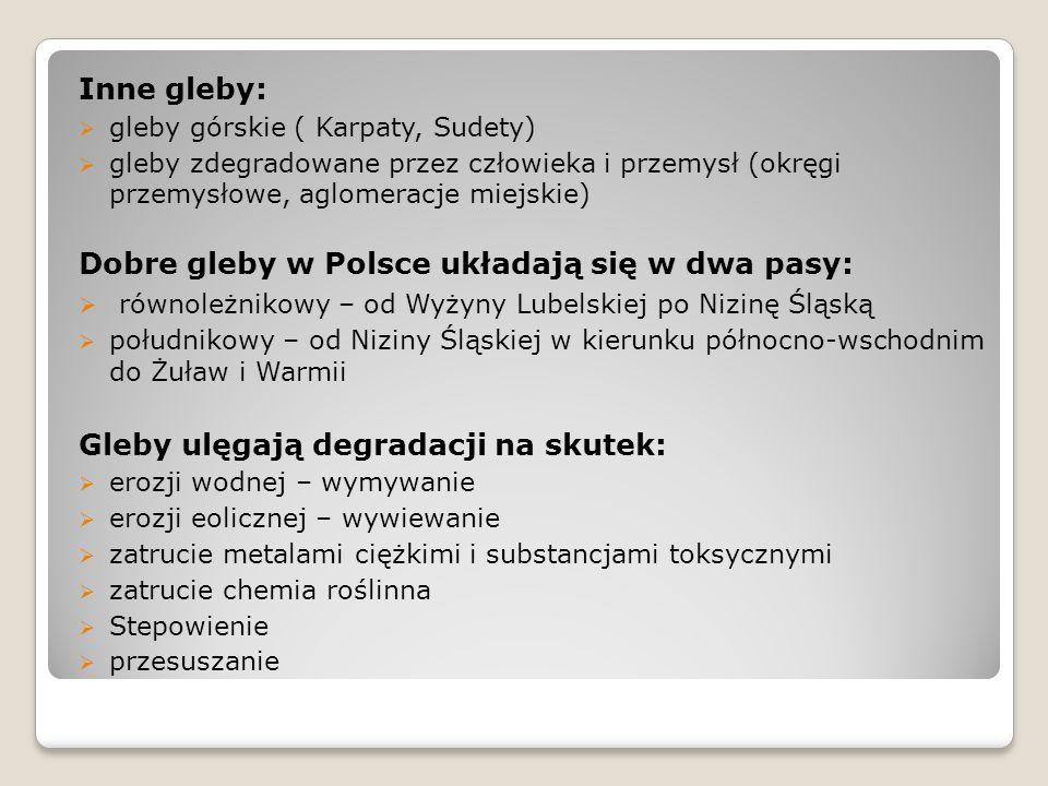 Dobre gleby w Polsce układają się w dwa pasy: