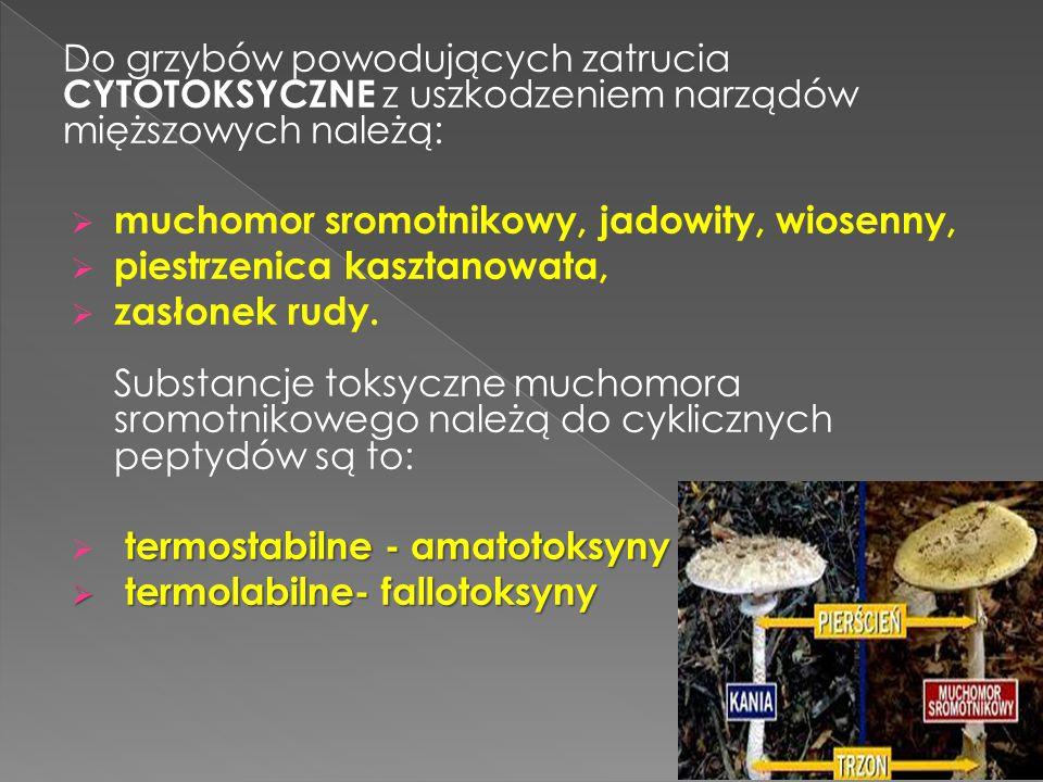 Do grzybów powodujących zatrucia CYTOTOKSYCZNE z uszkodzeniem narządów mięższowych należą: