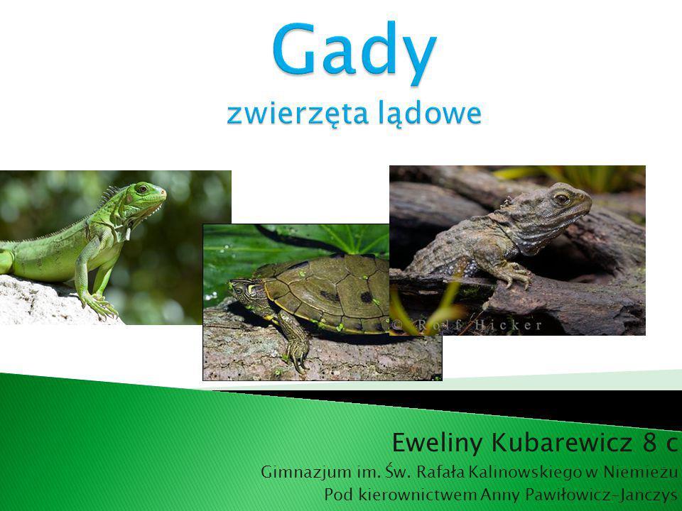Gady zwierzęta lądowe Eweliny Kubarewicz 8 c