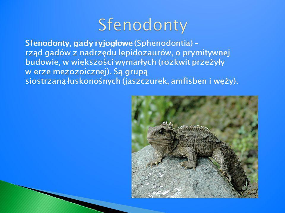 Sfenodonty