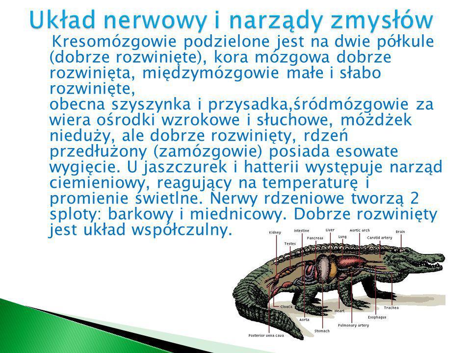 Układ nerwowy i narządy zmysłów
