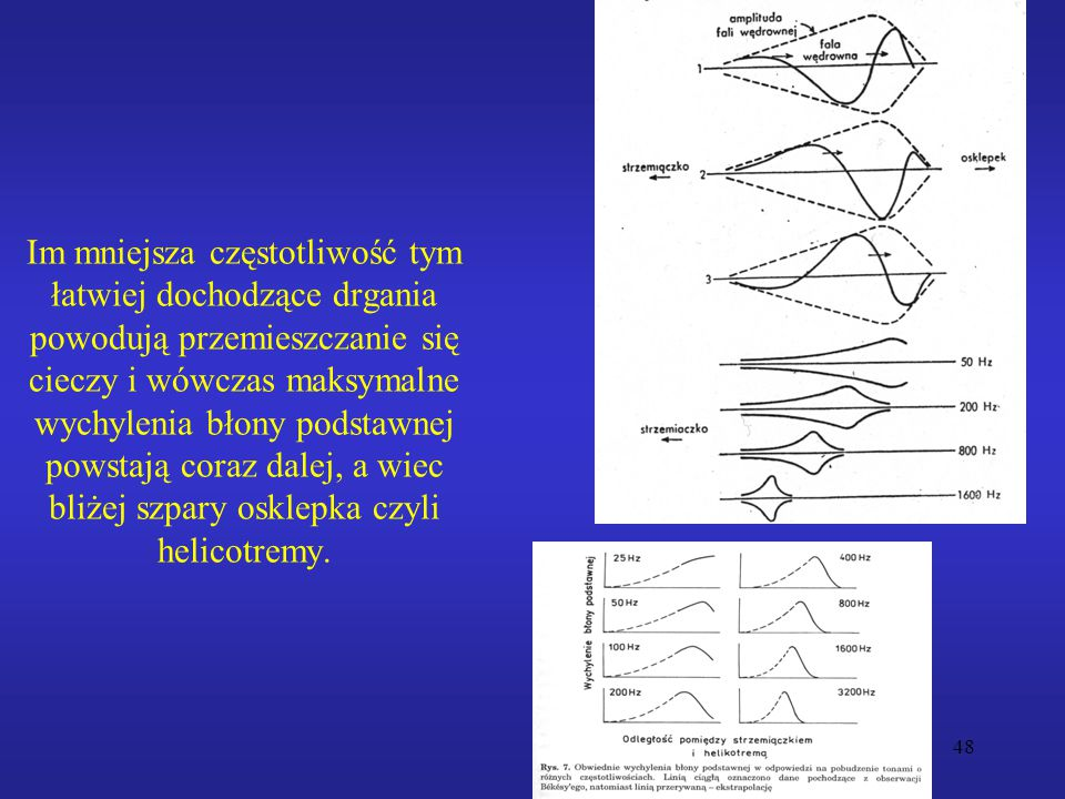 Im mniejsza częstotliwość tym łatwiej dochodzące drgania powodują przemieszczanie się cieczy i wówczas maksymalne wychylenia błony podstawnej powstają coraz dalej, a wiec bliżej szpary osklepka czyli helicotremy.