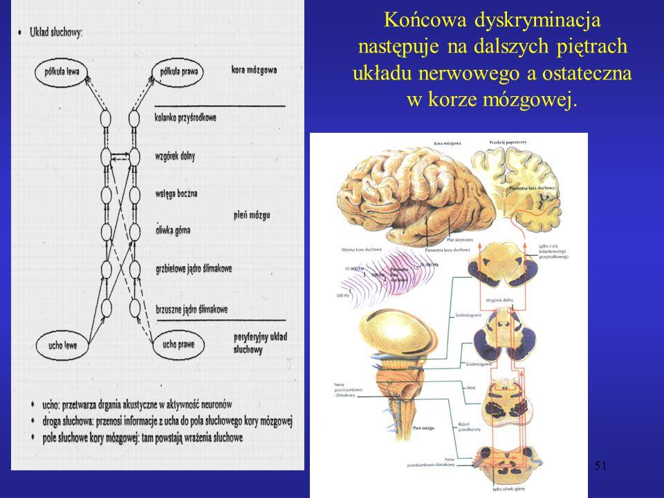 Końcowa dyskryminacja następuje na dalszych piętrach układu nerwowego a ostateczna w korze mózgowej.
