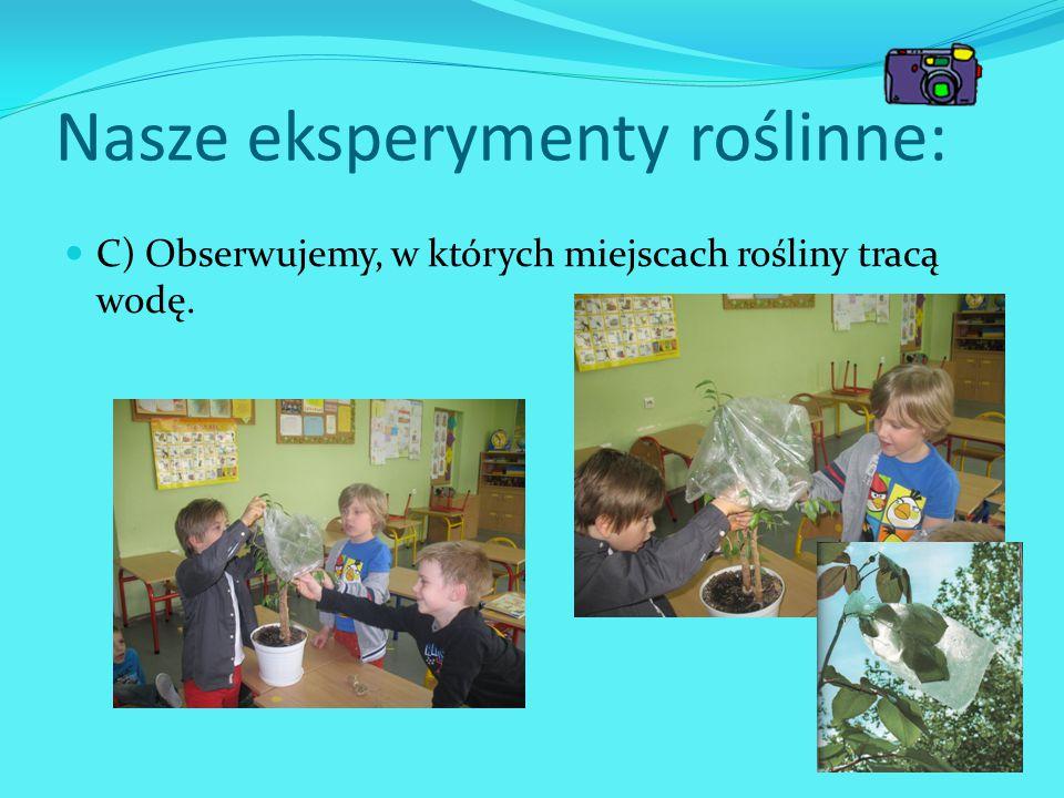 Nasze eksperymenty roślinne: