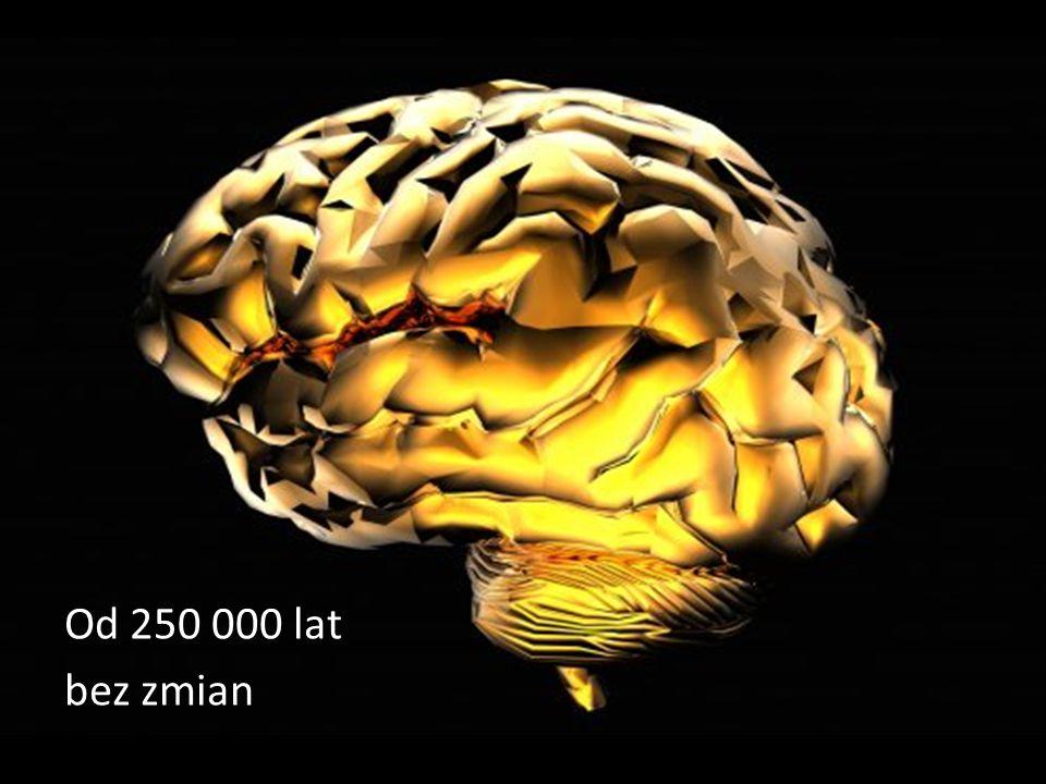 Od 250 000 lat bez zmian