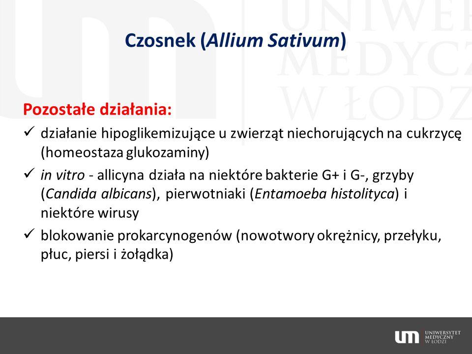 Czosnek (Allium Sativum)