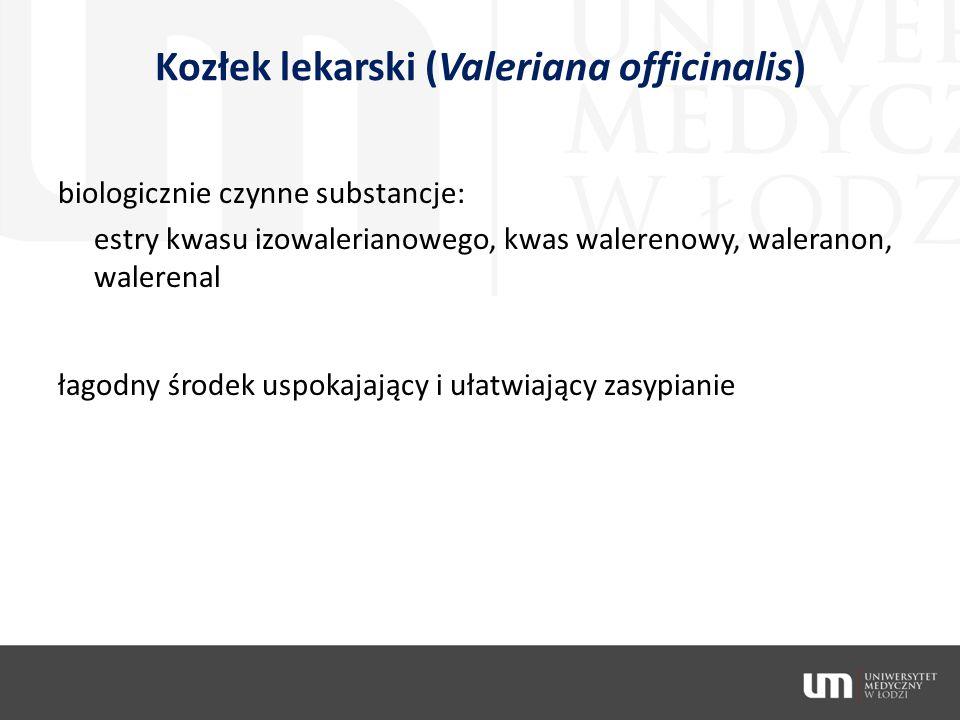Kozłek lekarski (Valeriana officinalis)