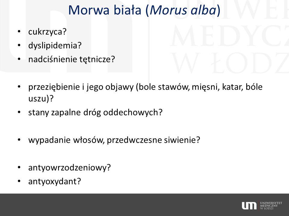 Morwa biała (Morus alba)
