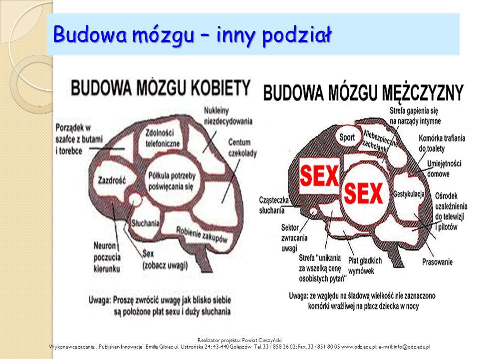 Budowa mózgu – inny podział