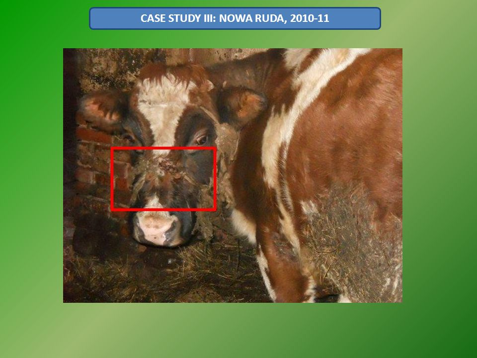 CASE STUDY III: NOWA RUDA, 2010-11