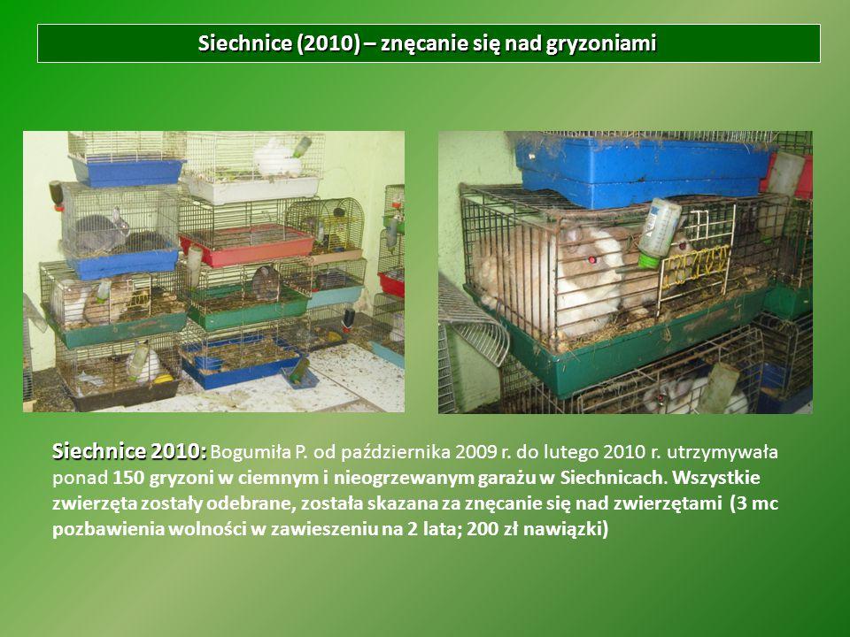 Siechnice (2010) – znęcanie się nad gryzoniami