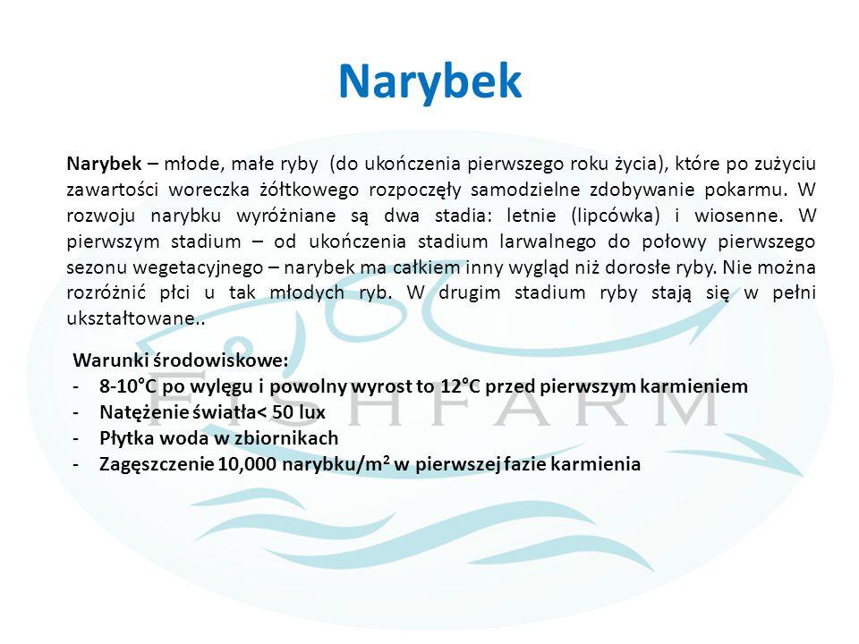 Narybek