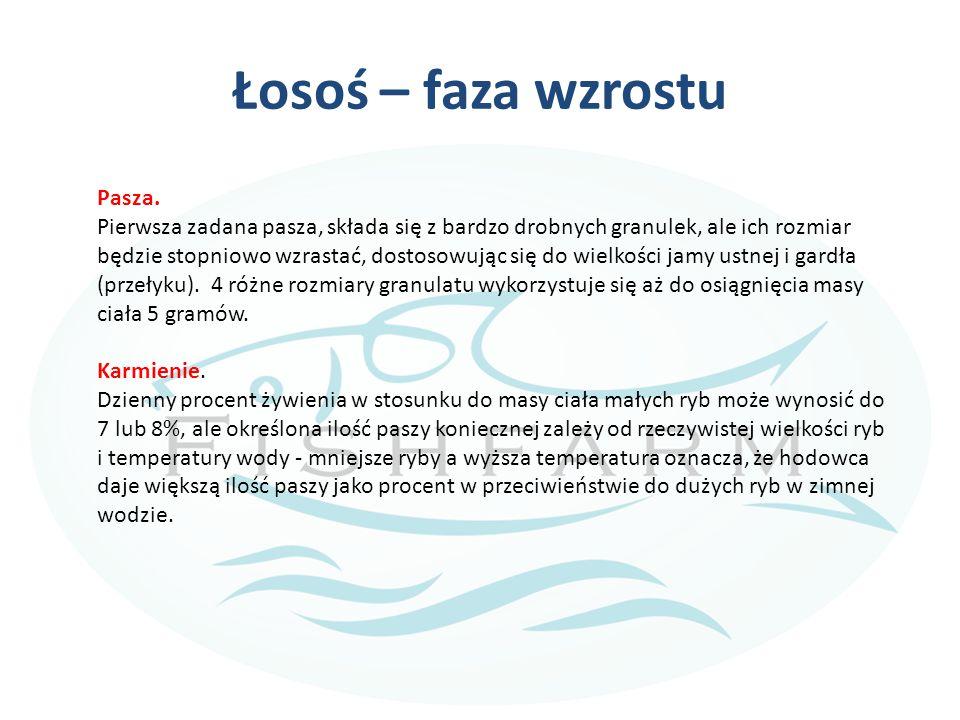 Łosoś – faza wzrostu Pasza.