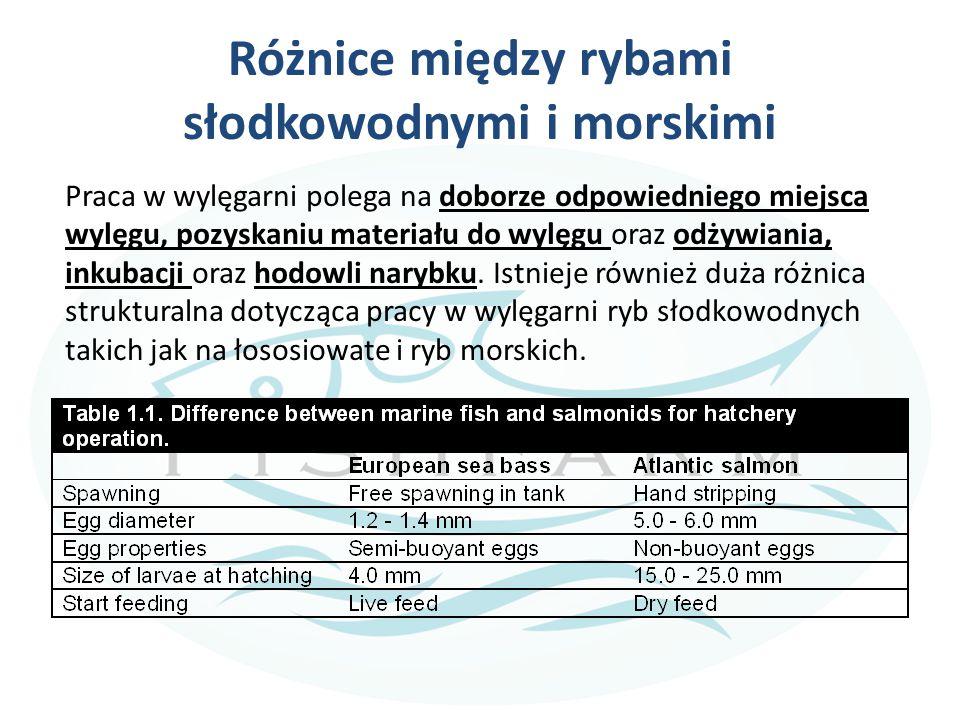 Różnice między rybami słodkowodnymi i morskimi