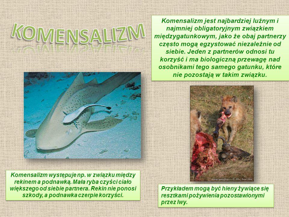 KOMENSALIZM