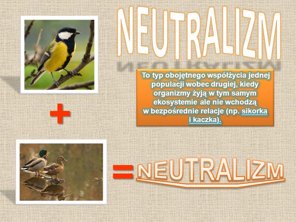 + = NEUTRALIZM NEUTRALIZM