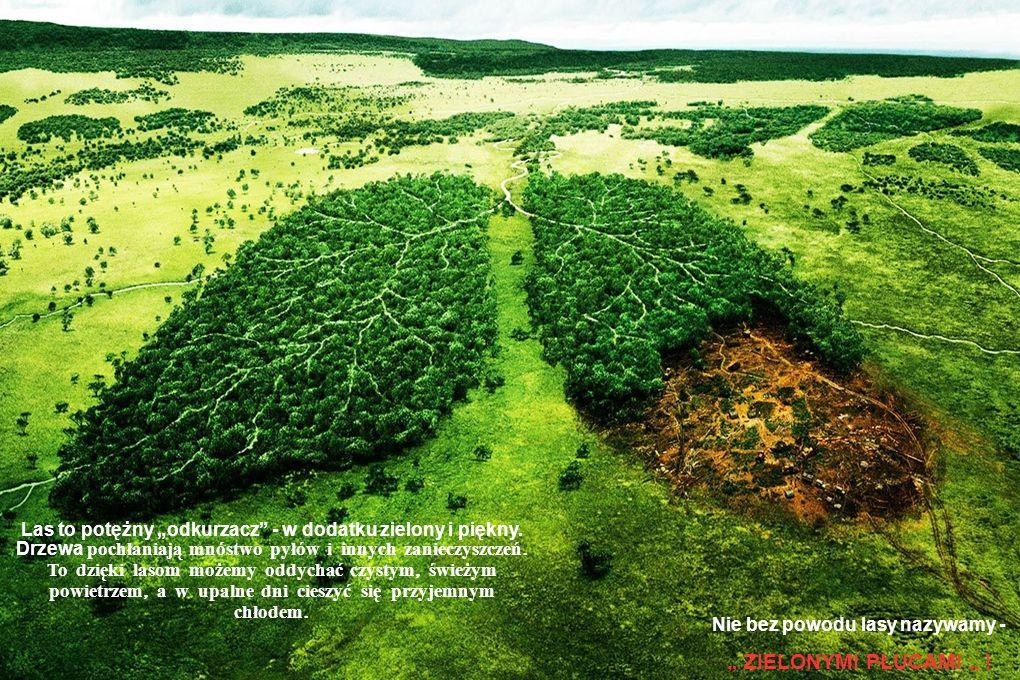 """Las to potężny """"odkurzacz - w dodatku zielony i piękny"""