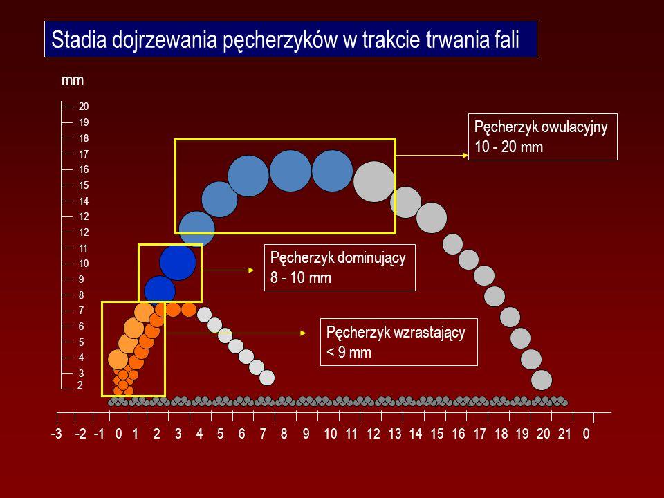 Stadia dojrzewania pęcherzyków w trakcie trwania fali