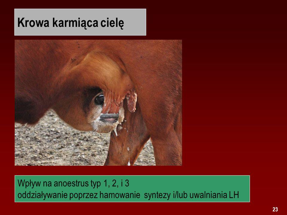 Krowa karmiąca cielę Wpływ na anoestrus typ 1, 2, i 3 oddziaływanie poprzez hamowanie syntezy i/lub uwalniania LH.