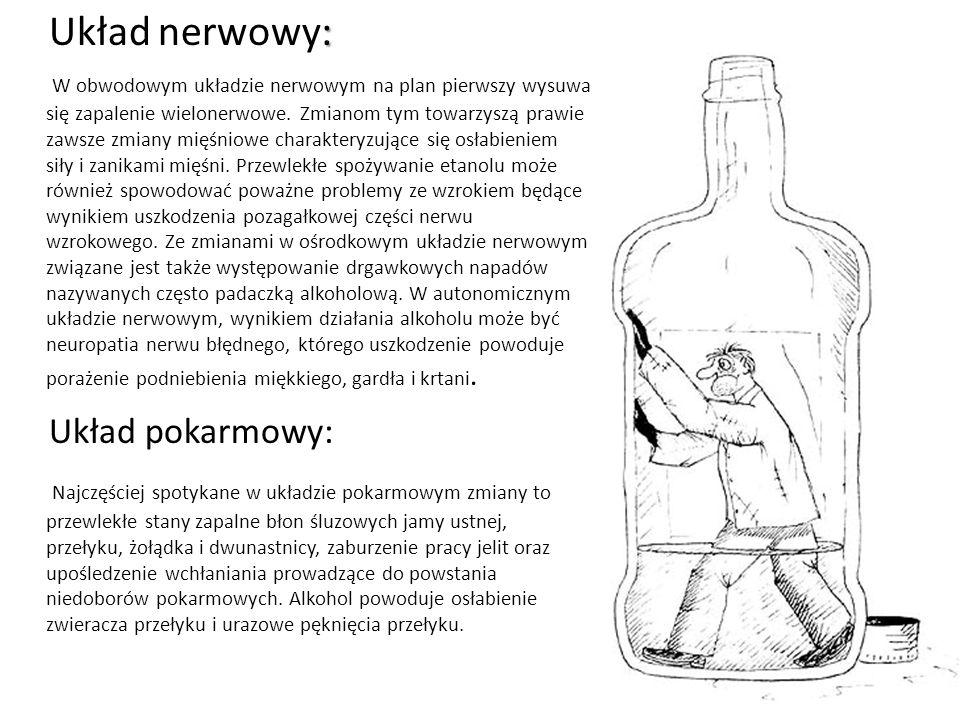 Układ nerwowy: Układ pokarmowy: