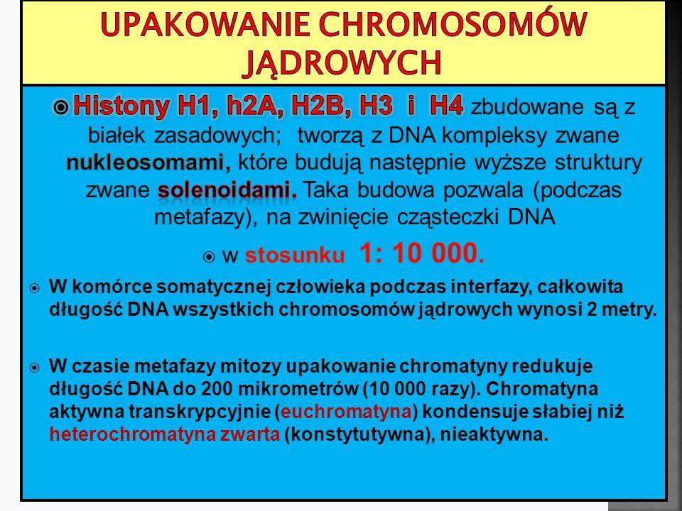 Upakowanie chromosomów jądrowych