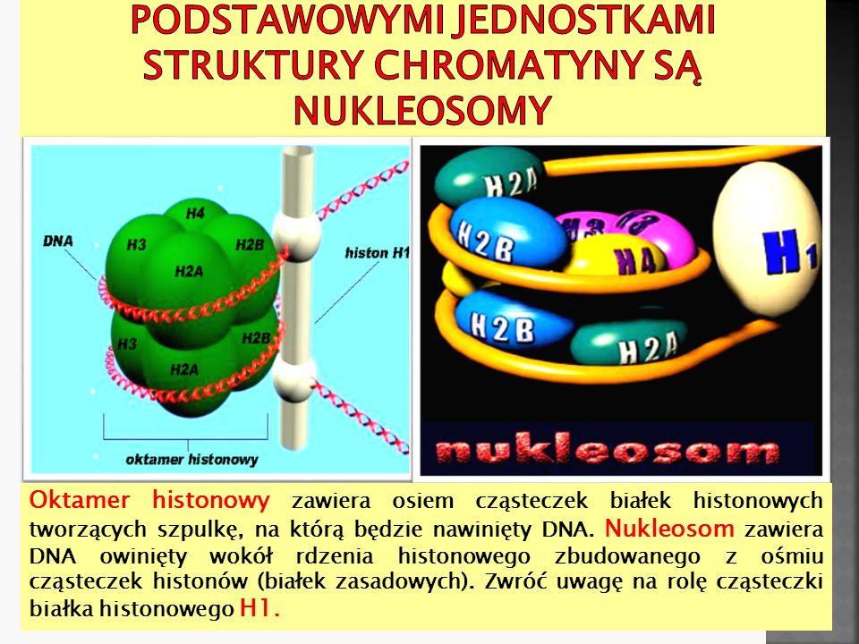 Podstawowymi jednostkami struktury chromatyny są nukleosomy