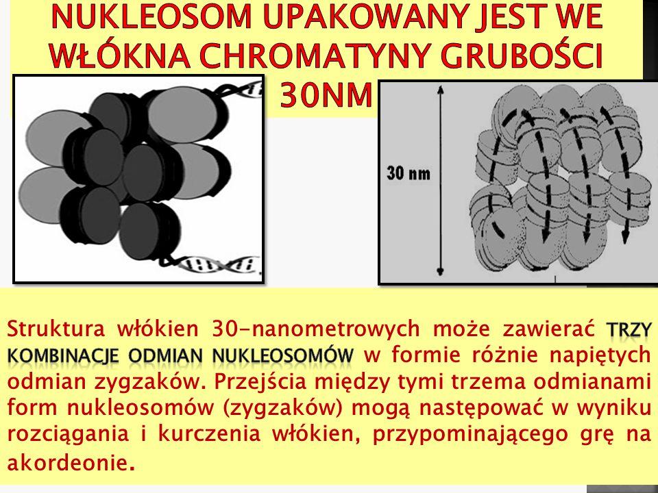 Nukleosom upakowany jest we włókna chromatyny grubości 30nm