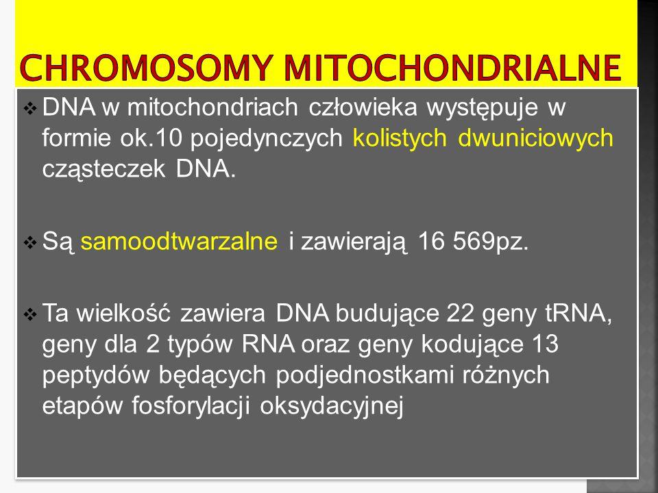 Chromosomy mitochondrialne