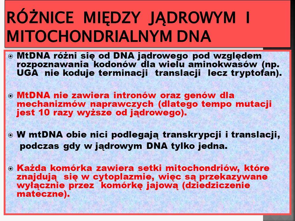Różnice między jądrowym i mitochondrialnym DNA