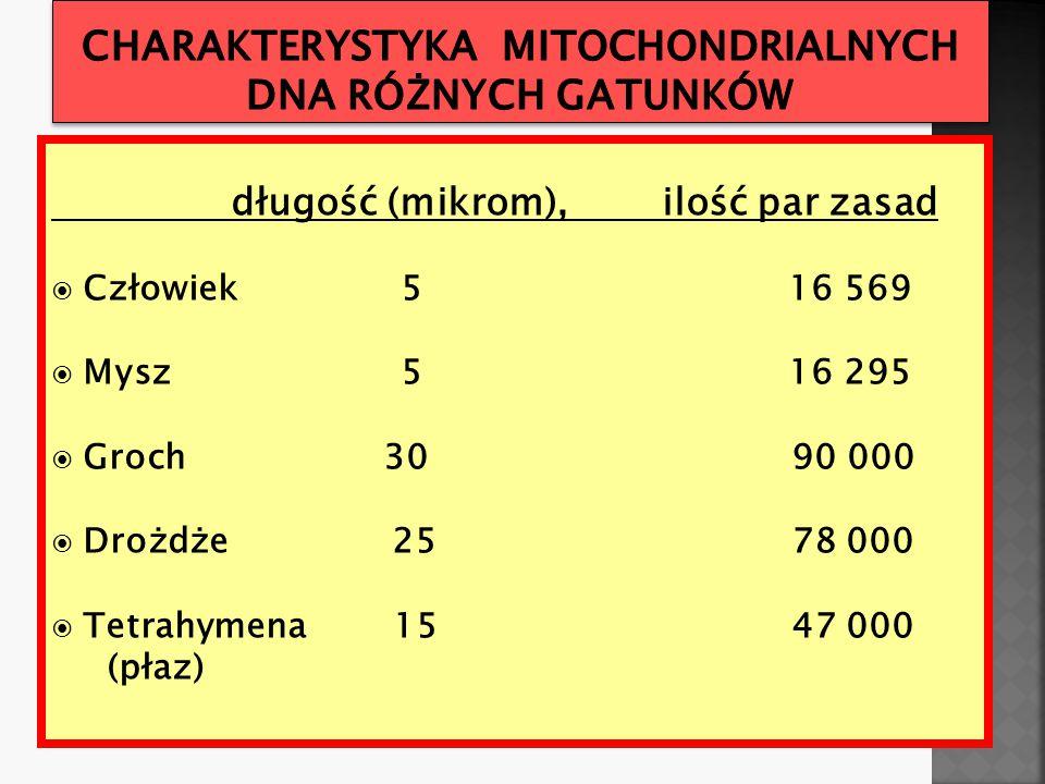 Charakterystyka mitochondrialnych DNA różnych gatunków