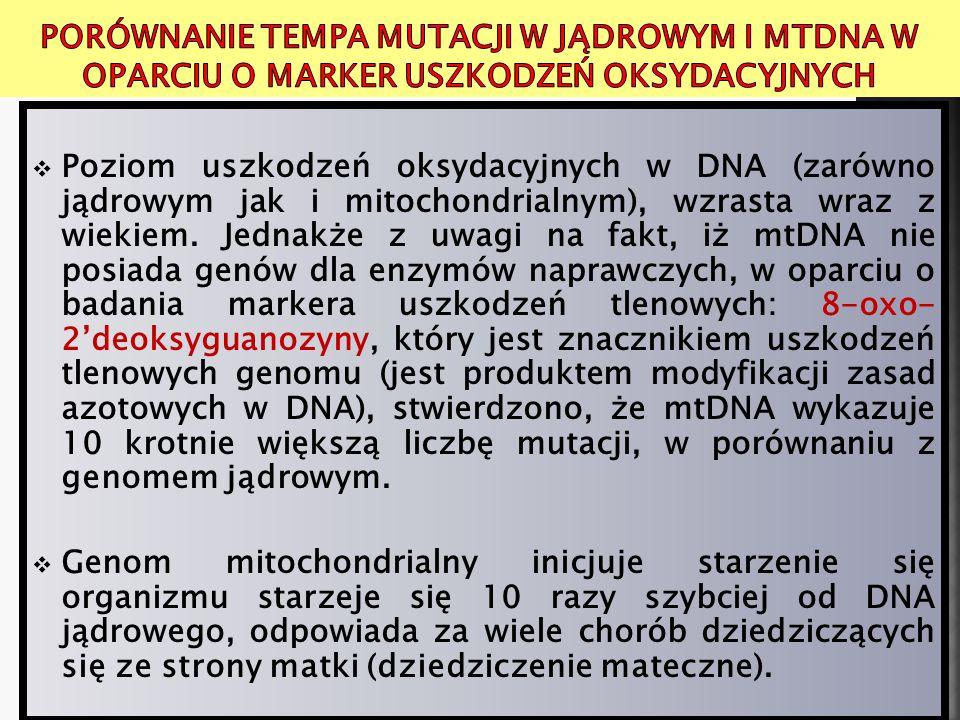 Porównanie tempa mutacji w jądrowym i mtDNA w oparciu o marker uszkodzeń oksydacyjnych