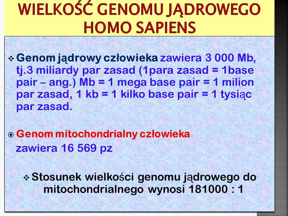 Wielkość genomu jądrowego Homo sapiens