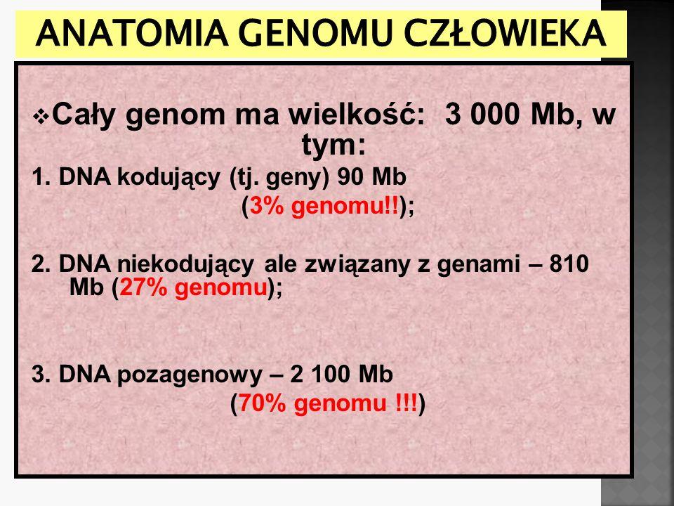 Anatomia genomu człowieka